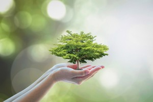 Growing Tree To Save Ecological Sustainability, Sustainable Envi